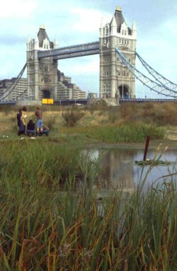 Ecological Parks Trust site by Tower Bridge